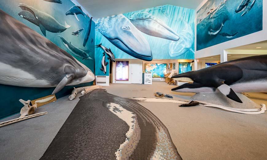 Mingan Island Cetacean Centre
