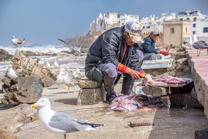 Fisherman busy gutting fish