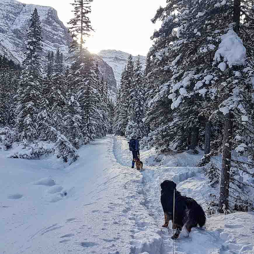 The Ribbon Creek Snowshoeing trails are dog-friendly