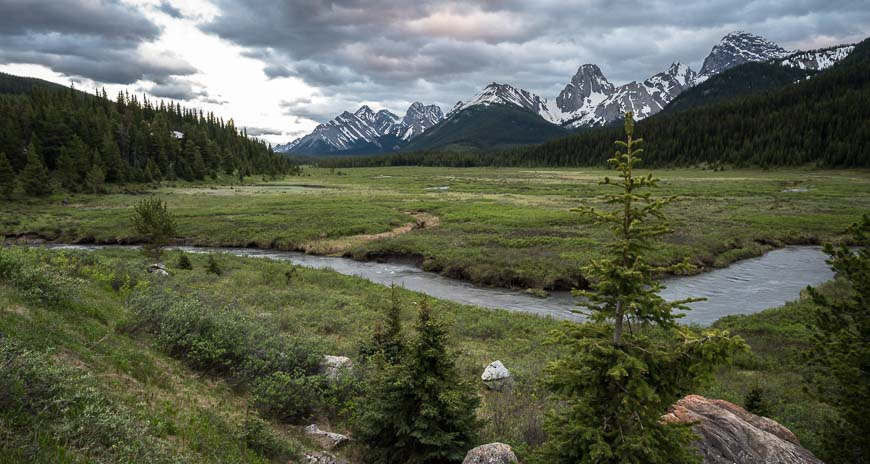 Looking across the meadows where 4 grizzly bears were seen in late June