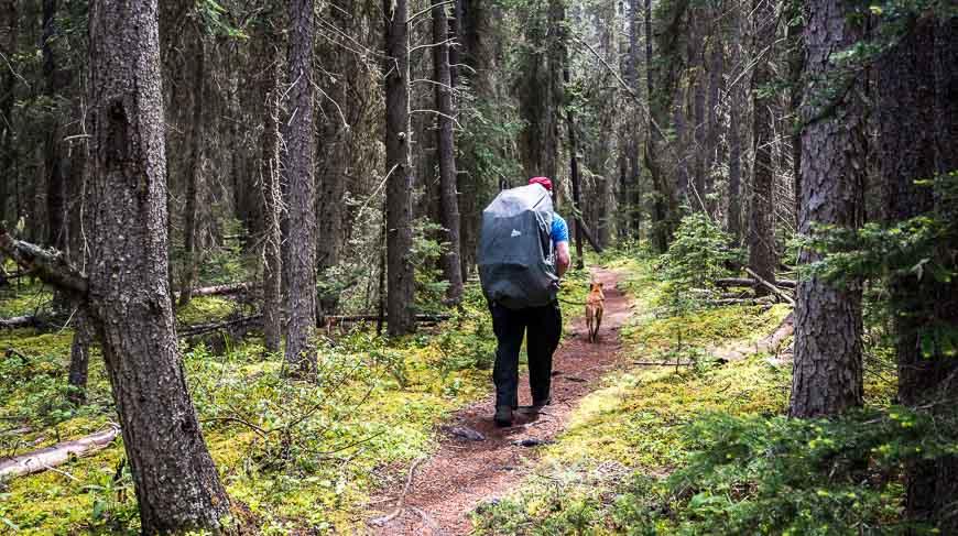 Pleasant walking to Glacier Lake, Banff National Park