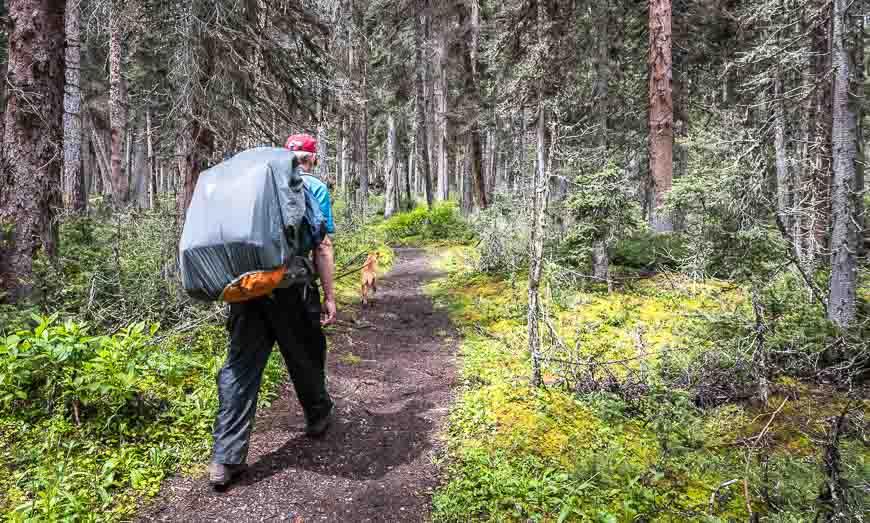 Hike through beautiful woods