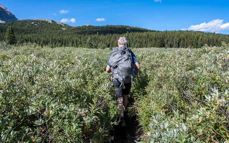 Hiking through waist-high meadows