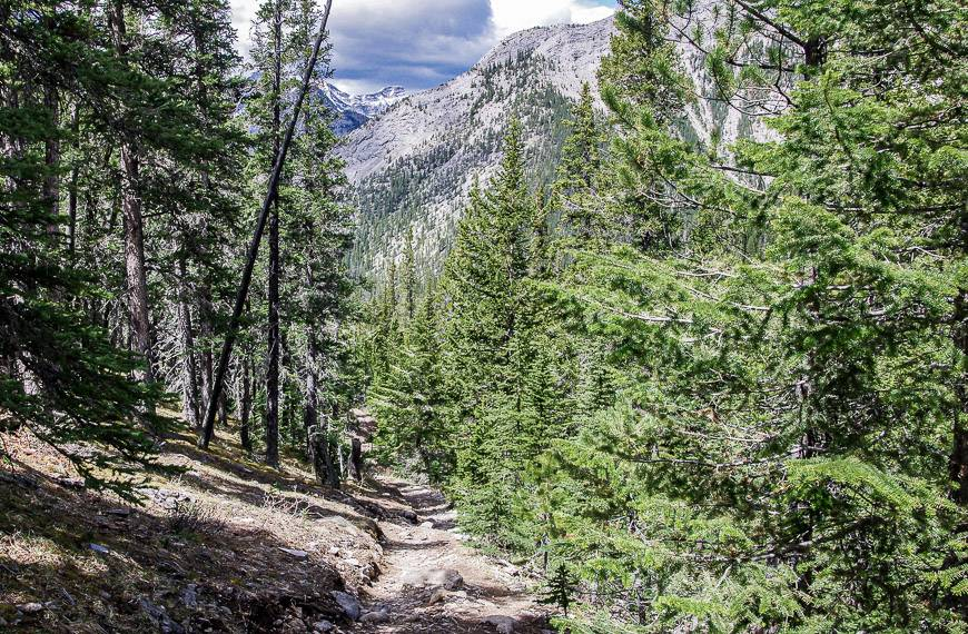 The Baldy Pass trail in summer