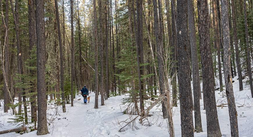 Baldy Pass trail hike