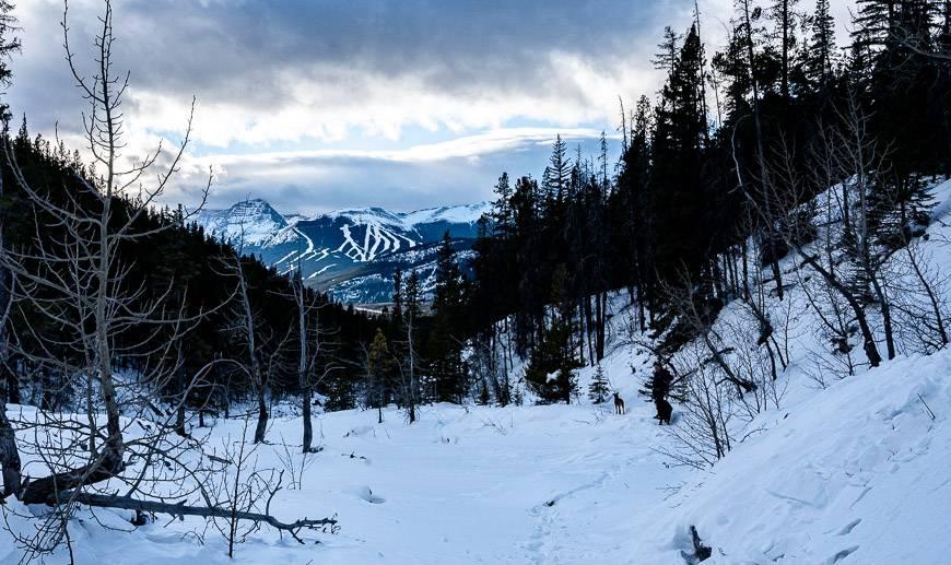 Looking down towards the Nakiska Ski Resort