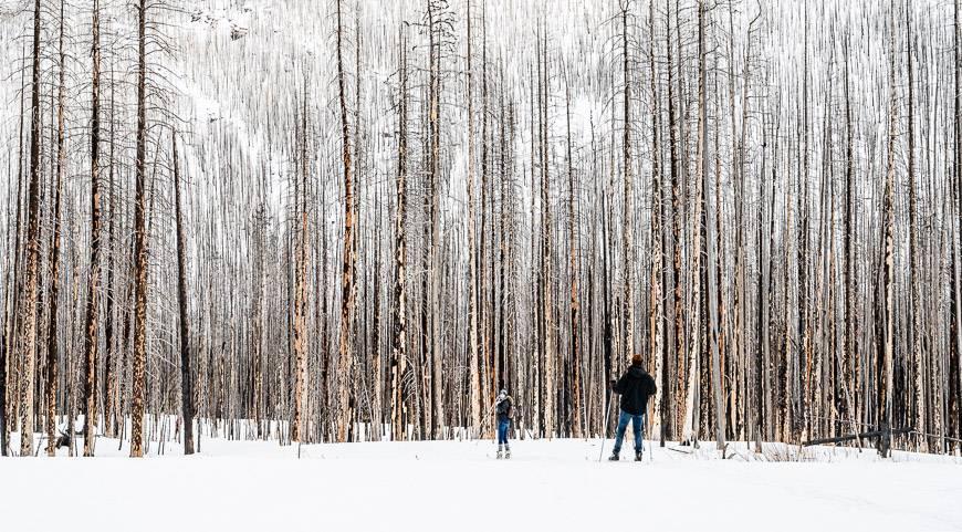 Cross-country skiers near Cameron Lake