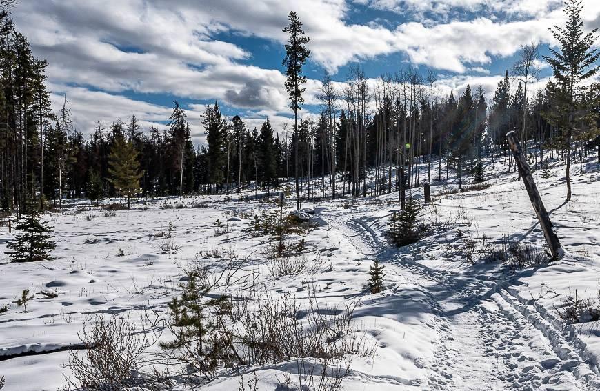 Pretty snowshoeing trails near Cottonwood Slough
