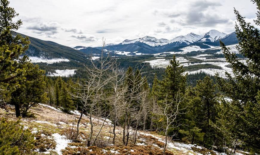 Looking towards the Sibbald Creek Trail