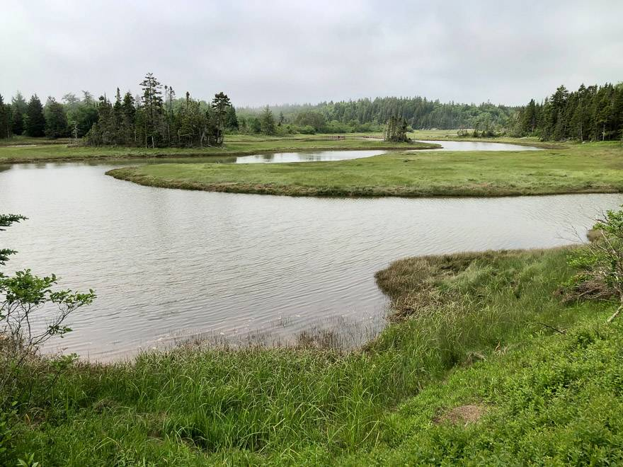 Things to do in New Brunswick - visit the Musquash Estuary