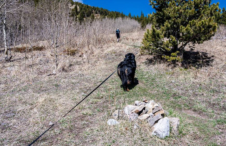 Stay right at the cairn and begin climbing in earnest