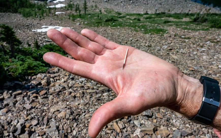 We come across about a dozen porcupine quills along the trail