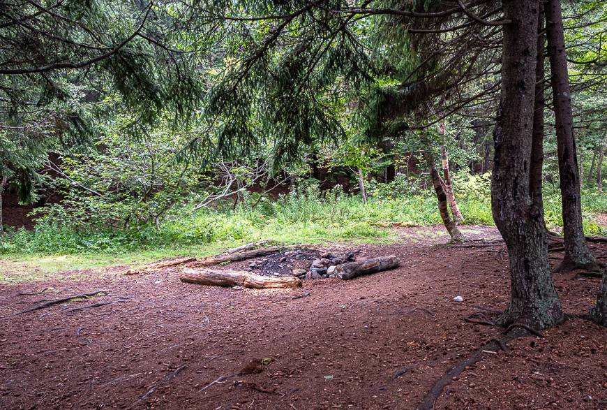 Heavily used campsite in the woods at Seely Beach Brook