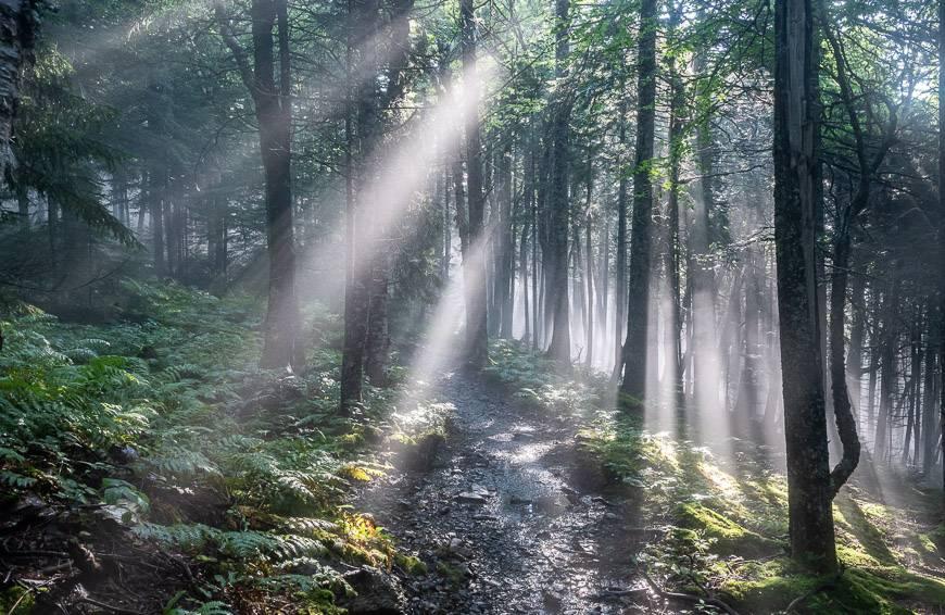 Sunbeams made for beautiful hiking