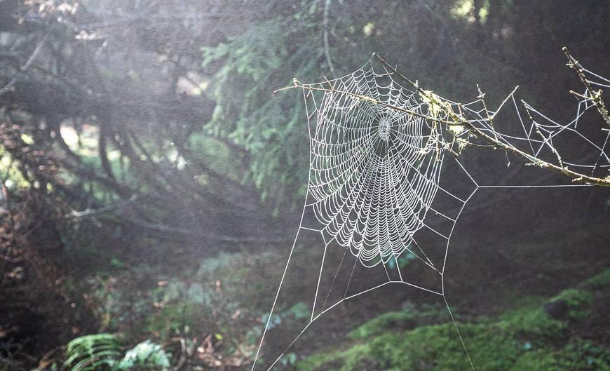 Spiderwebs by the dozens were all backlit